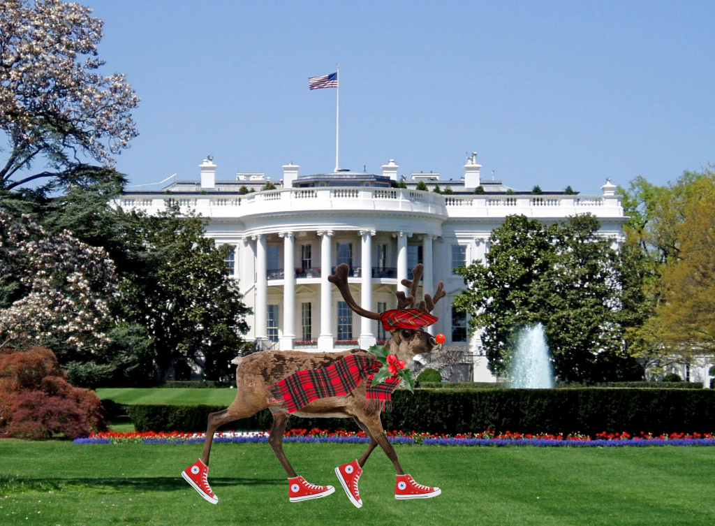 Reindeer in Washington D.C.